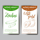 Food design with vegetable. Hand drawn sketch of white gourd and zucchini. Organic fresh product for card or poster Royalty Free Stock Photos