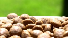 Food for dogs. Dry food. Rotation. Close up. stock video