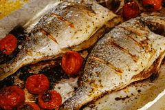 Food fish fresh dorado, meal seafood dinner, cooking. Food fish fresh dorado, meal seafood dinner with vegetables, cooking royalty free stock photos