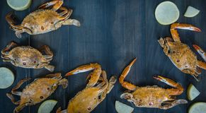 Food frame with crustacean royalty free stock photography