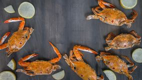 Food frame with crustacean. Crab on wooden background stock photography