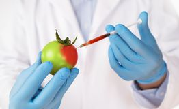 Food genetic modification concept Stock Image