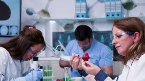 Food genetics scientist injecting GMO in strawberries