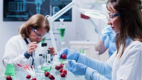 Food genetics scientist is studying fruit samples for experiments