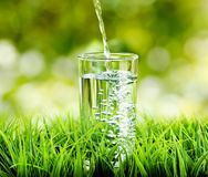 Glass of water on nature background Royalty Free Stock Photos