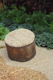 Food grain bucket. A lot of seed and grain in the wood basket with vegetable background Stock Photo