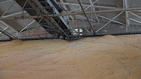 Food Grains Warehouse Stock Images