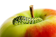 Green caterpillar on red apple Stock Images