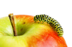 Green caterpillar on red apple Royalty Free Stock Photos