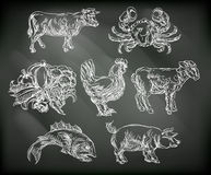 Food Groups Chalk Hand Drawn Animal Icons Royalty Free Stock Photography