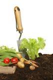 Food Harvest Royalty Free Stock Photos