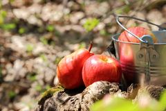 Food. Harvesting. A bucket of fruit in the garden on the stump a stock photography