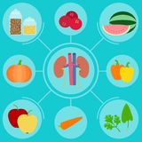 Food helpful for healthy kidney Royalty Free Stock Photos