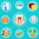 Food helpful for healthy teeth. Illustration of food helpful for healthy teeth stock illustration