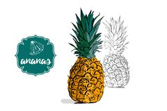 Cartoon whole colorful ananas and hand drawn sketch pine silhouette. Isolated on white. retro store label badge with text. Business fruit sticker. Tropical royalty free illustration