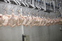 Food industry. Close up of poultry processing in food industry Royalty Free Stock Images