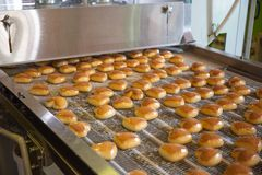 Food industry. Production line or conveyor belt with cookies in confectionary food factory or bakery, automated preparing. Food industry. Production line or royalty free stock photo