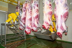 Food Industry Slaughterhouse Production Line. Food Industry Slaughterhouse Cattle Production Line Workers Cutting And Splitting Animal Carcasses royalty free stock image
