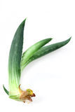 Food  ingredient  aloe Vera Stock Photo