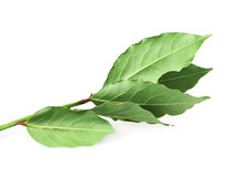 Food  ingredient -  bay leaf Stock Photos
