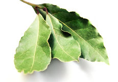 Food  ingredient -  bay leaf Royalty Free Stock Photos