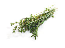 Food  ingredient - bouquet garni Stock Photos