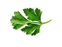Food  ingredient  celery Stock Photo