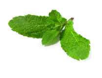 Food  ingredient green peppermint Stock Images