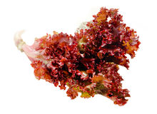 Food  ingredient - red salad Stock Photography