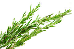 Food  ingredient rosemary Royalty Free Stock Photography