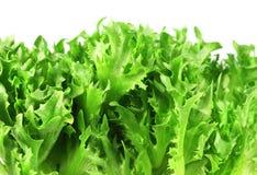 Food  ingredient - salad green Royalty Free Stock Images