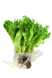 Food  ingredient - salad green Stock Photography