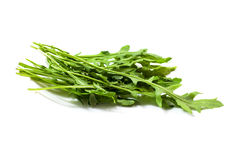 Food  ingredient - salad green ruccola (arugulla) Stock Photos