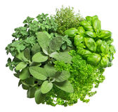 Food ingredients. Fresh herbs isolated on white background Royalty Free Stock Photo