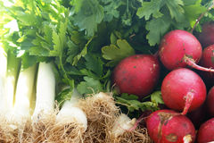Food ingredients from the garden: radishes, leeks, parsley Royalty Free Stock Photo