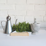Food ingredients to cook pesto sauce: olive oil in lipped jug, basil herbs, parmesan cheese Stock Image