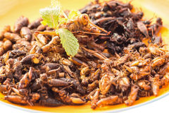 Food insect. Fried insects or Wood worm insect, Bamboo worm insect, Grasshopper insect and Cricket insect crispy with pandan after fried and add a light Stock Photo