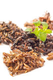 Food insect. Fried insects or Wood worm insect, Bamboo worm insect, Grasshopper insect and Cricket insect crispy with pandan after fried and add a light Stock Images