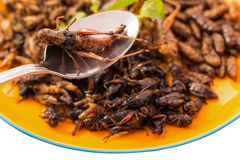Food insect Royalty Free Stock Photography