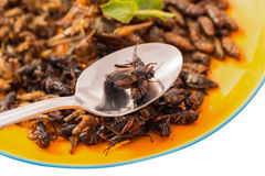 Food insect Stock Photos