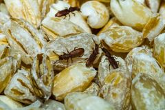 Food and insects Royalty Free Stock Photography