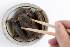 Food Insects: Woman hand holding Giant Water Bug is edible insect for eating as food Insects deep-fried crispy snack with. Chopsticks on plate, it is good stock photography