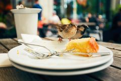 Food leftovers and hungry bird Stock Images