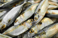 Food. Mackerel Fish At Market. Seafood. Healthy Eating. Nutritio. Fish. Food Background. Close Up Of Fresh Caught Mackerel Fish With Crashed Ice At Fish Market Royalty Free Stock Photos