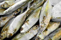 Food. Mackerel Fish At Market. Seafood. Healthy Eating. Nutritio. Fish. Food Background. Close Up Of Fresh Caught Mackerel Fish With Crashed Ice At Fish Market Stock Photo