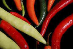 Food; multi colored chillis Stock Images