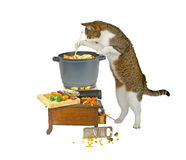 Food is nearly ready... Cat is cooking on white background Royalty Free Stock Images
