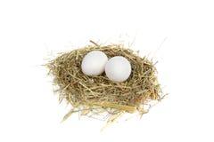 Food nest Stock Image