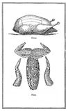 Food, old hare and goose chart Stock Image