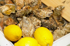 Food, oysters with lemon Royalty Free Stock Photos